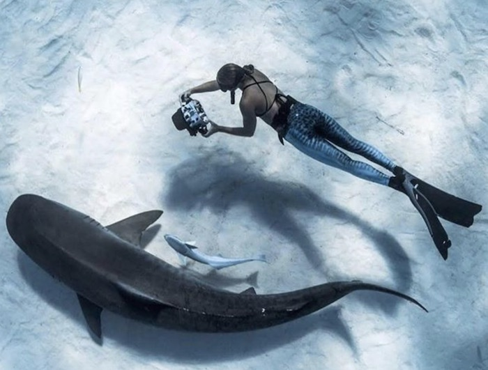 Girl diving with Whale shark